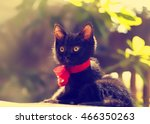 black kitten with a red ribbon... | Shutterstock . vector #466350263