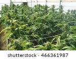 large marijuana grow operation  ... | Shutterstock . vector #466361987