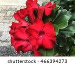 red flower azalea flower in the ... | Shutterstock . vector #466394273
