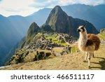 Llama In Front Of Ancient Inca...