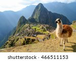 Llama In Front Of Ancient Inca...