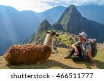 Tourist And Llama Sitting In...