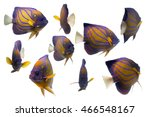 collection swimming fish on... | Shutterstock . vector #466548167