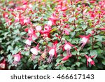 flower in cameron highland ... | Shutterstock . vector #466617143