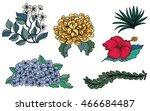 hand drawn tropical flower... | Shutterstock .eps vector #466684487
