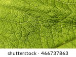 green leaf texture  abstract... | Shutterstock . vector #466737863