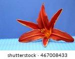 Orange Lily On A Blue...