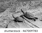 Two Turtles Resting On Flat...