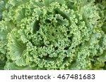 Flowering Kale. Ornamental ...