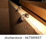 bee.bee.bee.bee.bee.bee.bee.bee....