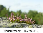 view on uncultivated wild... | Shutterstock . vector #467753417