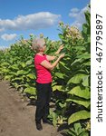 Small photo of Female farmer or agronomist examine blossoming tobacco plant in field