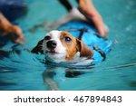 Jack Russell Terrier Wear Life...