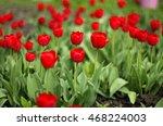 tulips | Shutterstock . vector #468224003
