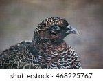 Small photo of Chinese ring-necked pheasant (Phasianus colchicus torquatus). Wildlife bird.