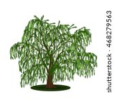Detached Tree Willow With...