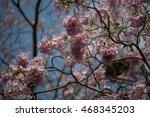 pink flower with selective focus   Shutterstock . vector #468345203