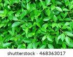 green leaves background natural ... | Shutterstock . vector #468363017