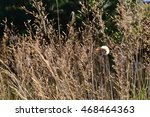 forest meadow with dry grass | Shutterstock . vector #468464363