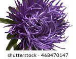 chrysanthemums on a white... | Shutterstock . vector #468470147