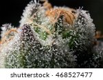 Beautiful Cannabis Macro On...