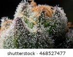 beautiful cannabis macro on... | Shutterstock . vector #468527477
