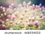 Small photo of Globe Amaranth Flower (Other names are Amaranthus, Tampala, Tassel Flower, Flaming Fountain, Fountain Plant, Joseph's Coat, Love-lies-bleeding, Amaranth, Summer Poinsettia) with light effect