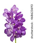 Small photo of close-up Vanda Orchid Wanda - Queen of orchids, purple flower isolated on a white background