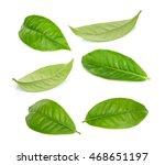 Set Of Green Tea Leaf Isolated...