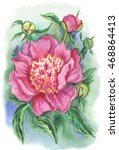 pink peony. painted in... | Shutterstock . vector #468864413