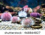 Sea Urchin  Oceanic Landscape ...