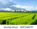 Small photo of Green ear of rice in paddy rice field.rice field.rice field.rice field.rice field.rice field.rice field.rice field.rice field.rice field.rice field.rice field.rice field.rice field.rice field.