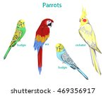 set parrots vector illustration | Shutterstock .eps vector #469356917