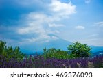 hidden mt.fuji with lavender | Shutterstock . vector #469376093