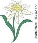 blooming edelweiss flower....   Shutterstock .eps vector #469565477