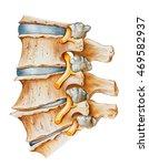 spine   lumbar osteoarthritic... | Shutterstock . vector #469582937