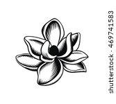 magnolia illustration vector