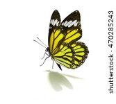 beautiful yellow monarch... | Shutterstock . vector #470285243