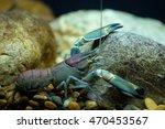 crayfish | Shutterstock . vector #470453567