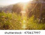 sun leak at the field.... | Shutterstock . vector #470617997