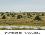 land with lot of termites   Shutterstock . vector #470702567