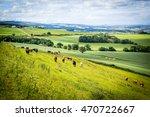 a herd of cows in a field in...   Shutterstock . vector #470722667