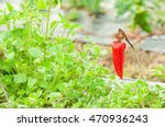Dry Red Pepper With Rusty...