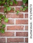 Ivy Vines On Brick Wall....