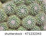 Texture On Cactus