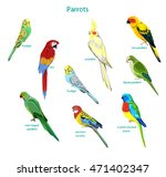 big set parrots vector... | Shutterstock .eps vector #471402347
