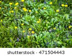 Small photo of Yellow dandelion (Taraxacum) and blue alehoof (Glechoma hederacea) flowers in the green spring meadow.