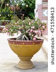 Small photo of Pink Adenium in Potted