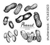 peanut   fruit vegetable vector ...   Shutterstock .eps vector #471631823