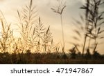 grass swaying in the morning... | Shutterstock . vector #471947867